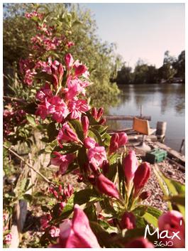 http://pixel-x.cowblog.fr/images/fleurs2.jpg